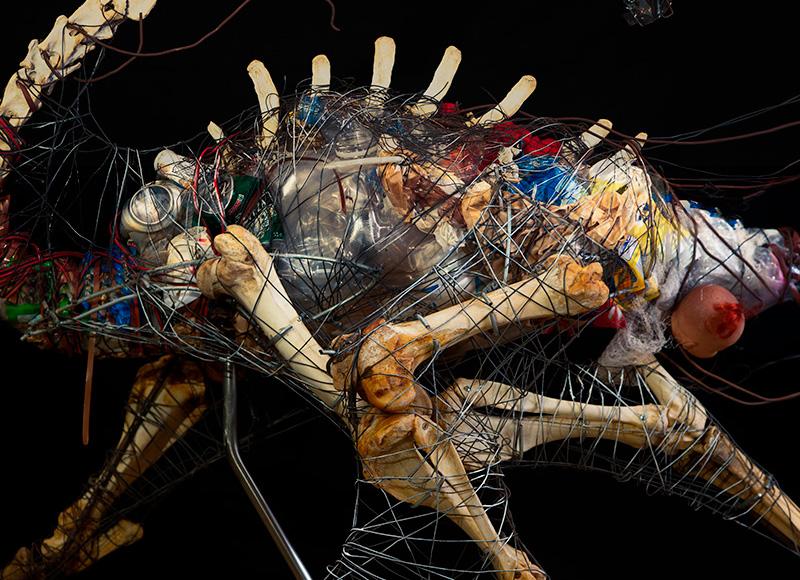 evoluciotoxica-les bernardes