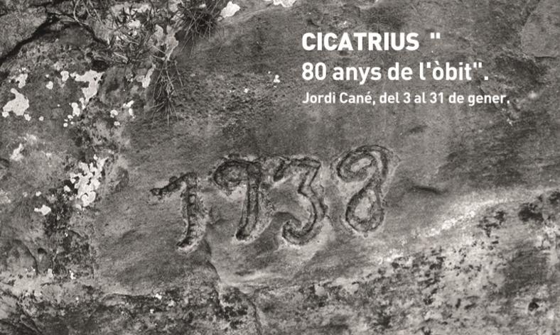 Jordi-cane-cicatrius